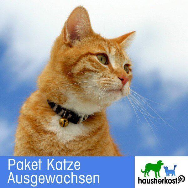 Paket Katze Ausgewachsen (Inhalt 9kg)